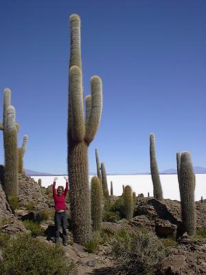 """""""La vida de los Cactus"""""""